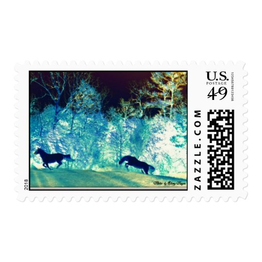 Postage Stamp of beautiful Andalusian Horses.