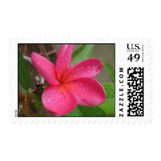 postage stamp - pink plumeria