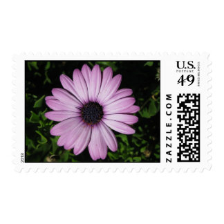 postage stamp - purple daisy