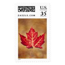 POSTAGE STAMP: Red Maple Leaf