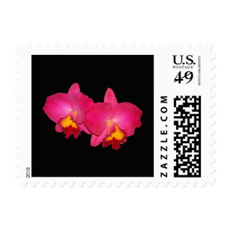 Postage stamp, two Pink cattleya orchids