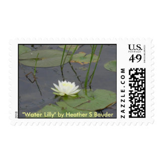 Postage Stamp - Water Lily