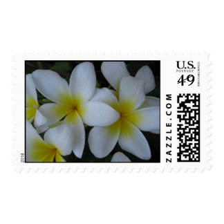 postage stamp - white plumerias