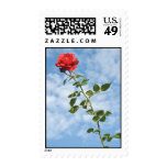 Postage Stamp with Single Red Rose