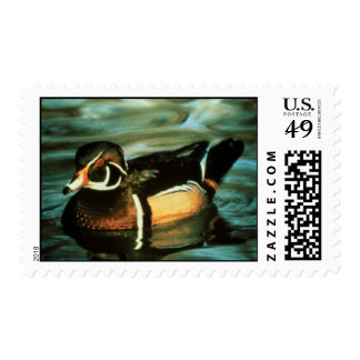 Postage Stamp Wood Duck