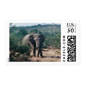 Postage Stamp Zazzle Elephant