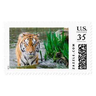 postage stamps, for sale !'