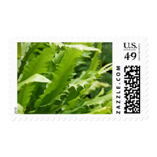 Postage Stamps - Saw Tooth Kelp Fern