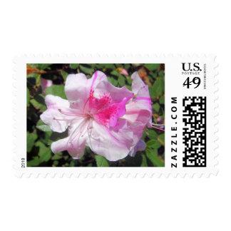 Postage Stamps - USPS - George Taber Azalea
