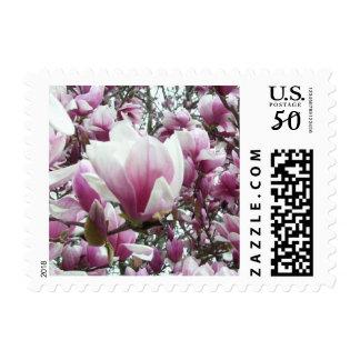 Postage Stamps - USPS - Saucer Magnolia