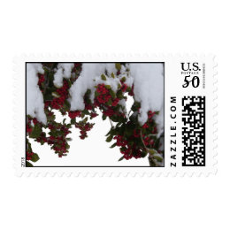 Postage Stamps - USPS - Snowy Holly & Berries