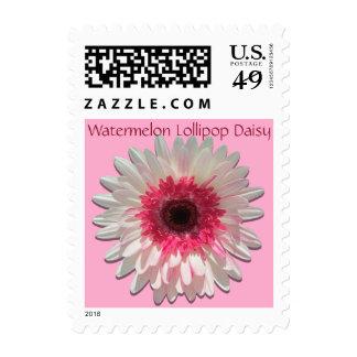 Postage Stamps - USPS - Watermelon Lollipop Daisy
