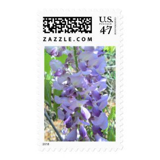 Postage Stamps - USPS - Wisteria in Bloom