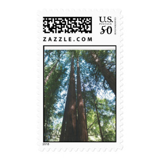 Postage Stamps with photo of Redwood Trees