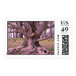 Postage Tree of Life