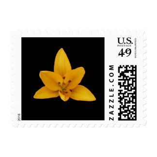 Postage, yellow lily. postage