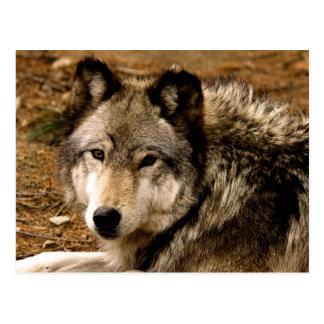 Postal 1630 del lobo de madera