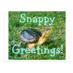 Postal #1 de la tortuga de rotura