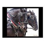 Postal #1 de los caballos de proyecto