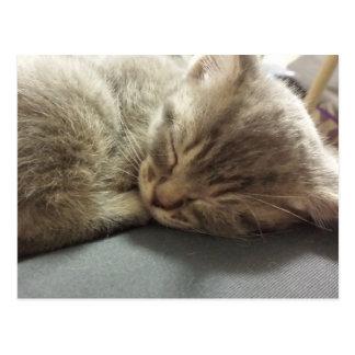 postal 2 del gato el dormir