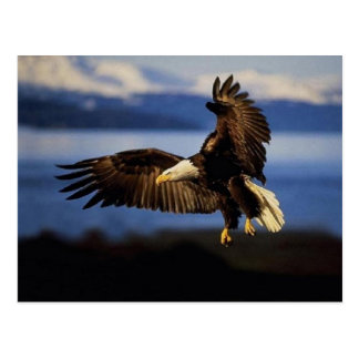 Postal 38 de Eagle