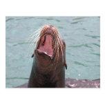 Postal abierta de la boca del león marino