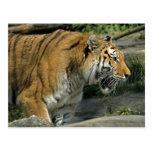 Postal abierta de la boca del tigre