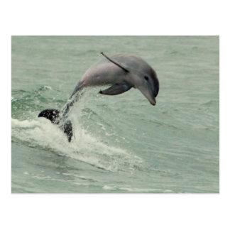 Postal adaptable del delfín
