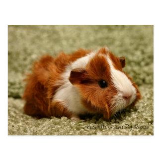 Postal adorable del conejillo de Indias del bebé