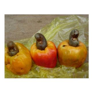 Postal africana de la fruta del anacardo