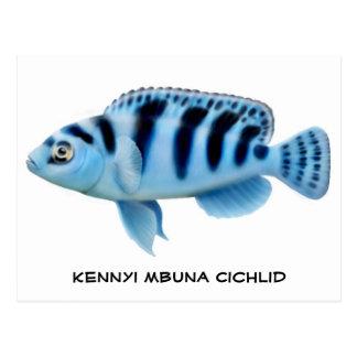Postal africana del Cichlid de Kennyi