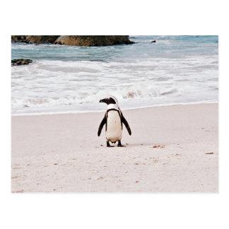 Postal africana del pingüino