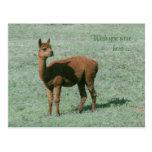 Postal - alpaca - deseo usted estaba aquí