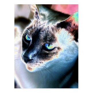 Postal alterada reservada del gato siamés