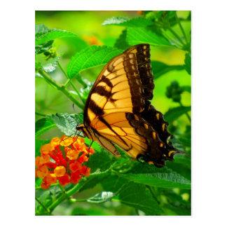 Postal amarilla #81N 081 del SG Swallowtail