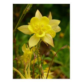 Postal amarilla de la flor de Columbine