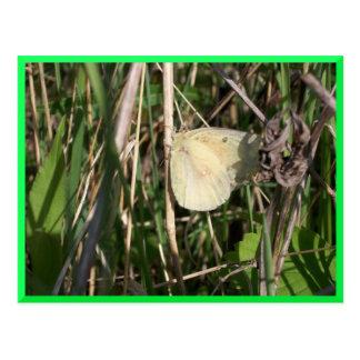 Postal amarilla de la mariposa