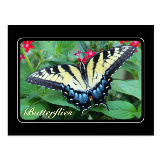 Postal amarilla de la mariposa de Swallowtail