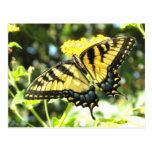 Postal amarilla de la mariposa de Swallowtail del