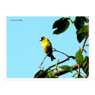 Postal amarilla del pájaro