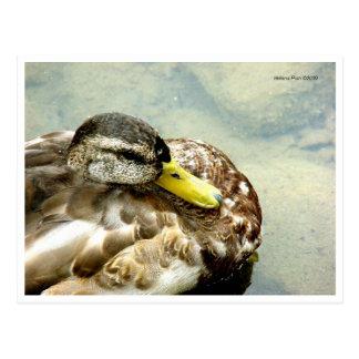Postal amarilla del pato del pico