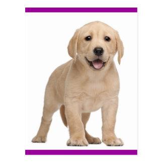Postal amarilla del perro de perrito del labrador