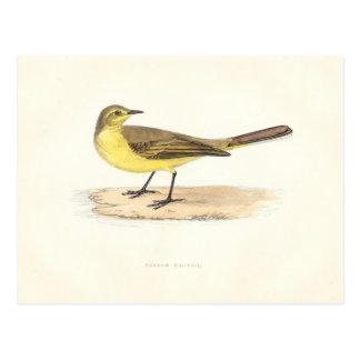 Postal amarilla del Wagtail