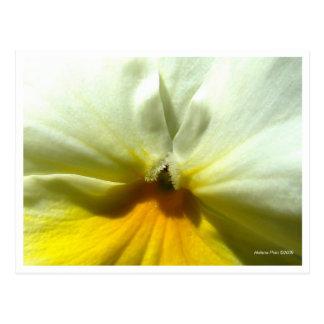 Postal amarilla macra de la flor