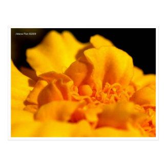 Postal amarilla macra de los pétalos de la flor
