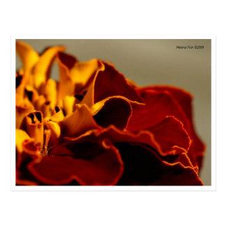 Postal amarilla roja macra de los pétalos de la fl