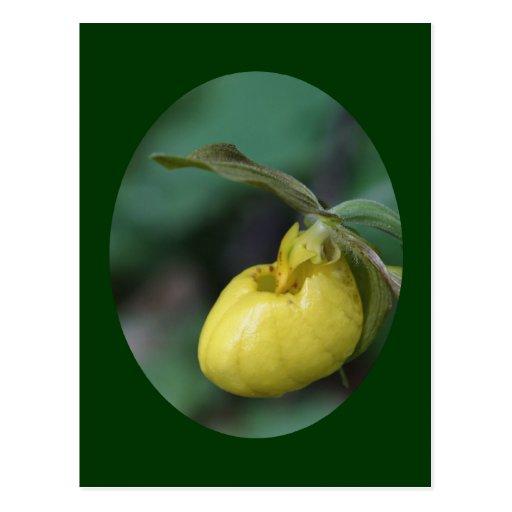 Postal amarilla salvaje de la foto de la flor de s