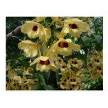 Postal amarilla y marrón de las orquídeas