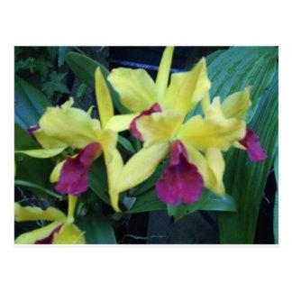 Postal amarilla y violeta de las orquídeas