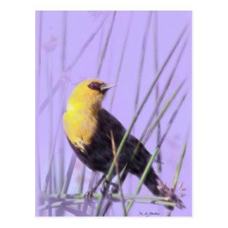Postal Amarillo-Dirigida del mirlo…